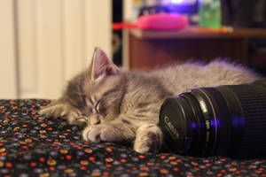 Canon and a Kitty.. by candysamuels