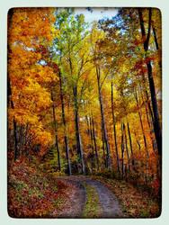 Autumn Leaves near Asheville, NC - November 2013 by docjen
