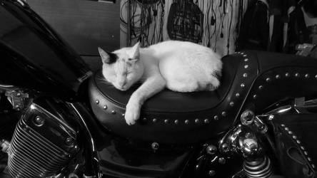 Biker cat by MauraGreen