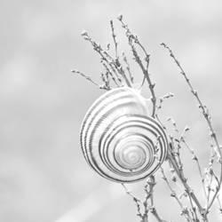Cute lil' spiral by MauraGreen