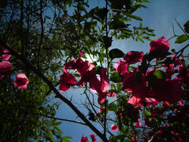 Flowers by mariah22