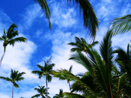 Palm trees by Kr4mon