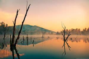 morning by senicar