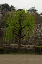 Tree with Osaka Castle by Danika-Stock
