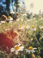 Flower Lens by Zoroo