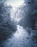 Winter walk 2 by Zoroo