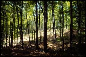 Treeland by Zoroo