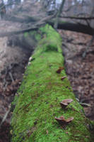 GreenWood by Zoroo