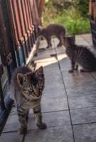 Three Meows by Zoroo