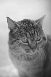 My pet by Zoroo