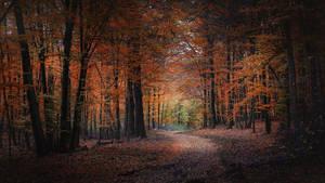 Orange Path by Zoroo