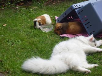 Lilly's worldly wisdoms #6: making new friends by Cat-Burglar-Nami