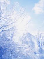 Frozen Bloom by Himmelmeere
