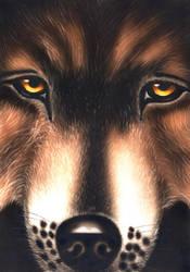 Wolf by van27