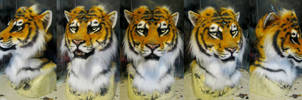 My mascot Ajna tiger head by Crystumes