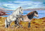 The Shetlands - Calea And Teddy by AnoraAlia