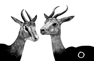 Gazelles by rghayati