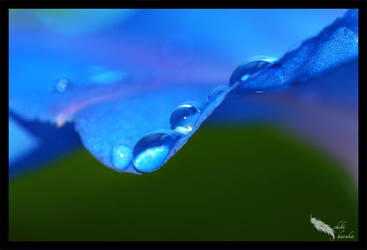 drops on blue by chibiharuka