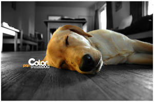 pop.color Snoozie Dog by yt458