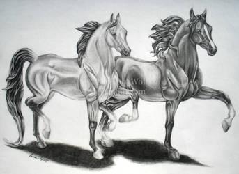 Breyer Horses by TheBlaqkWolf