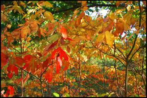Autumn Falls by SZenz