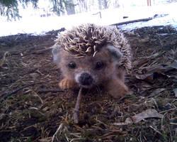 hedgehog  Furzik by Nataly-firsova