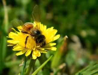Little Bee 2 by FaerieBert