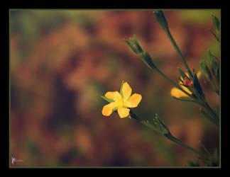 Delicate Dreams by FaerieBert