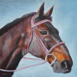 Horse Portrait by Brandon-Schaefer