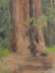 Giant Redwood - Plein Air Painting by Brandon-Schaefer