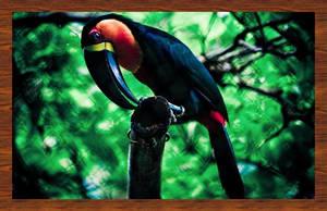 Toucan by LaS-BR