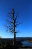 Tree day by 2Brne