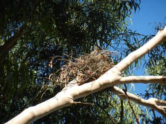 A birds home by Hiddenmistdash