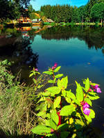 End of summer at the pond by patrickjobst