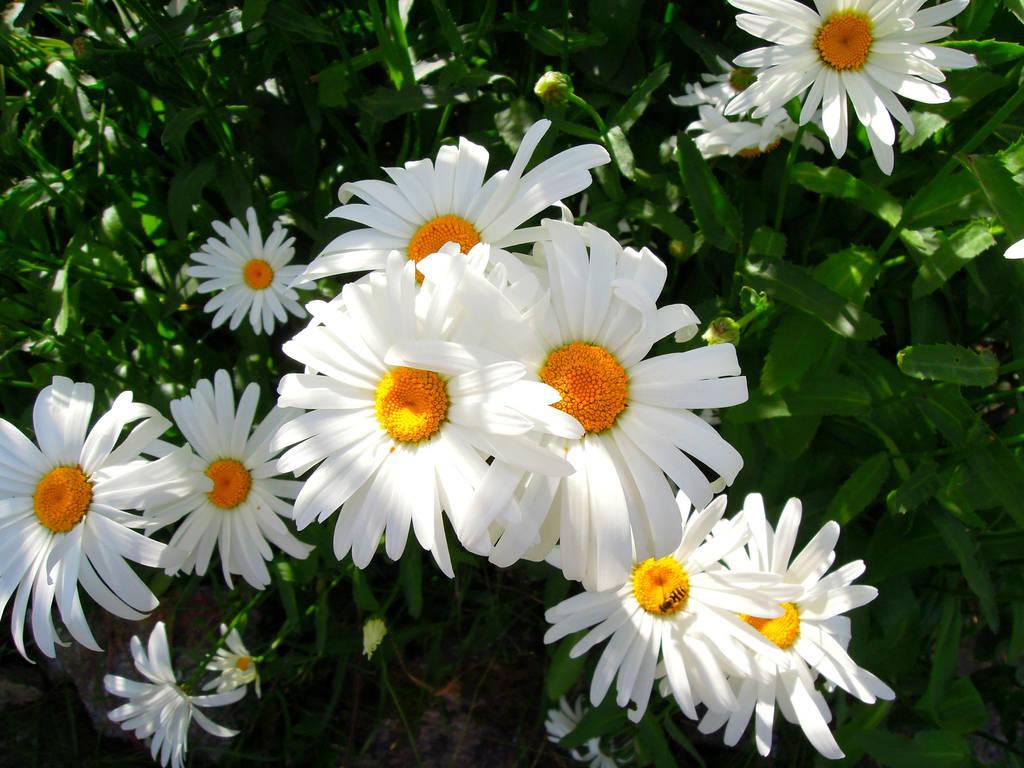Beauty of Flowers - Alaska by Philizius