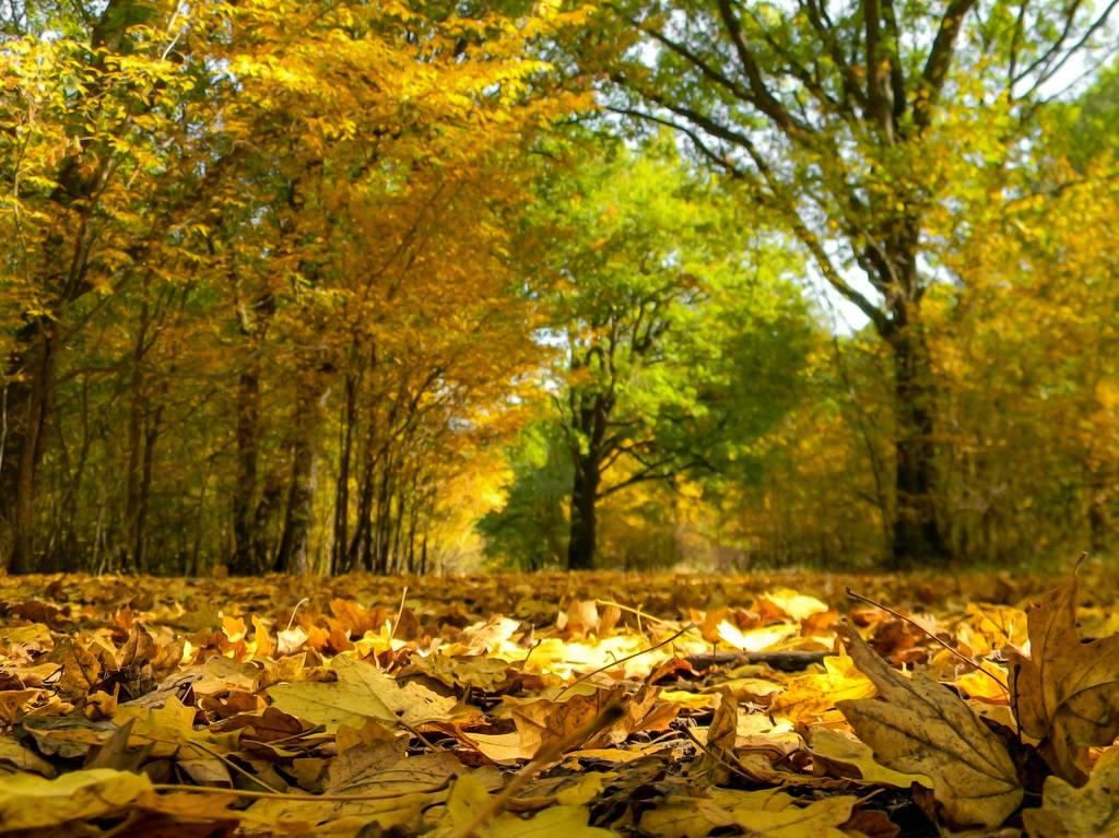 My favorite season by AutumnIulia