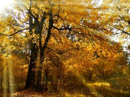 Fall in love by AutumnIulia
