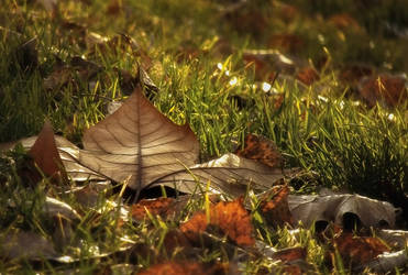 The leaf brings message from the unseen world by AutumnIulia