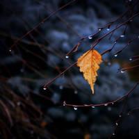 Smell the rain by AutumnIulia