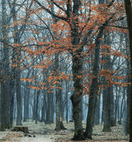 Trees are poems that the earth writes upon the sky by AutumnIulia