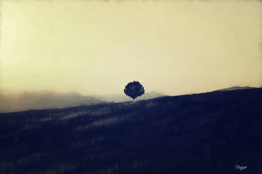 The Lonely One by Trajan-pro