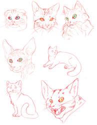 .:Cat studies:. by CrimsonPencil94