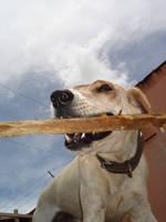 Nervous Dog by mwtntnet