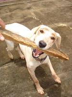 Kira bad dog by mwtntnet