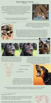 Dog Anatomy Tutorial 4 by SleepingDeadGirl