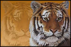 Wild Life Series : Tiger by thatgirlashy