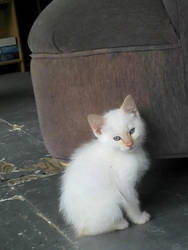 Nermal the Nameless Kitten by Kaitrosebd