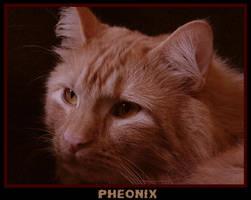 Pheonix by Kaitrosebd