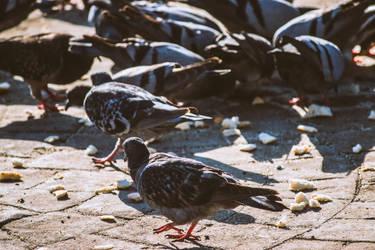 Doves by KhaledReese