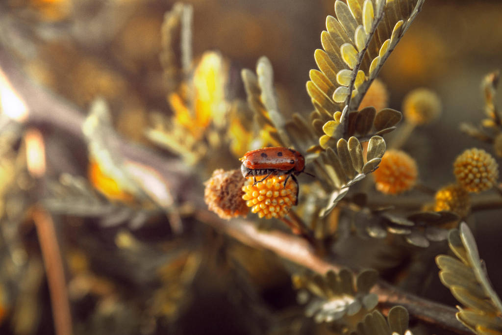 beautiful ladybug by KhaledReese